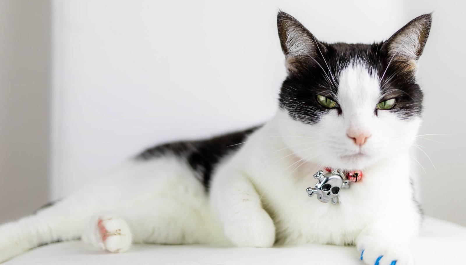Rüyada Birden Fazla Kedi Yavrusu Görmek