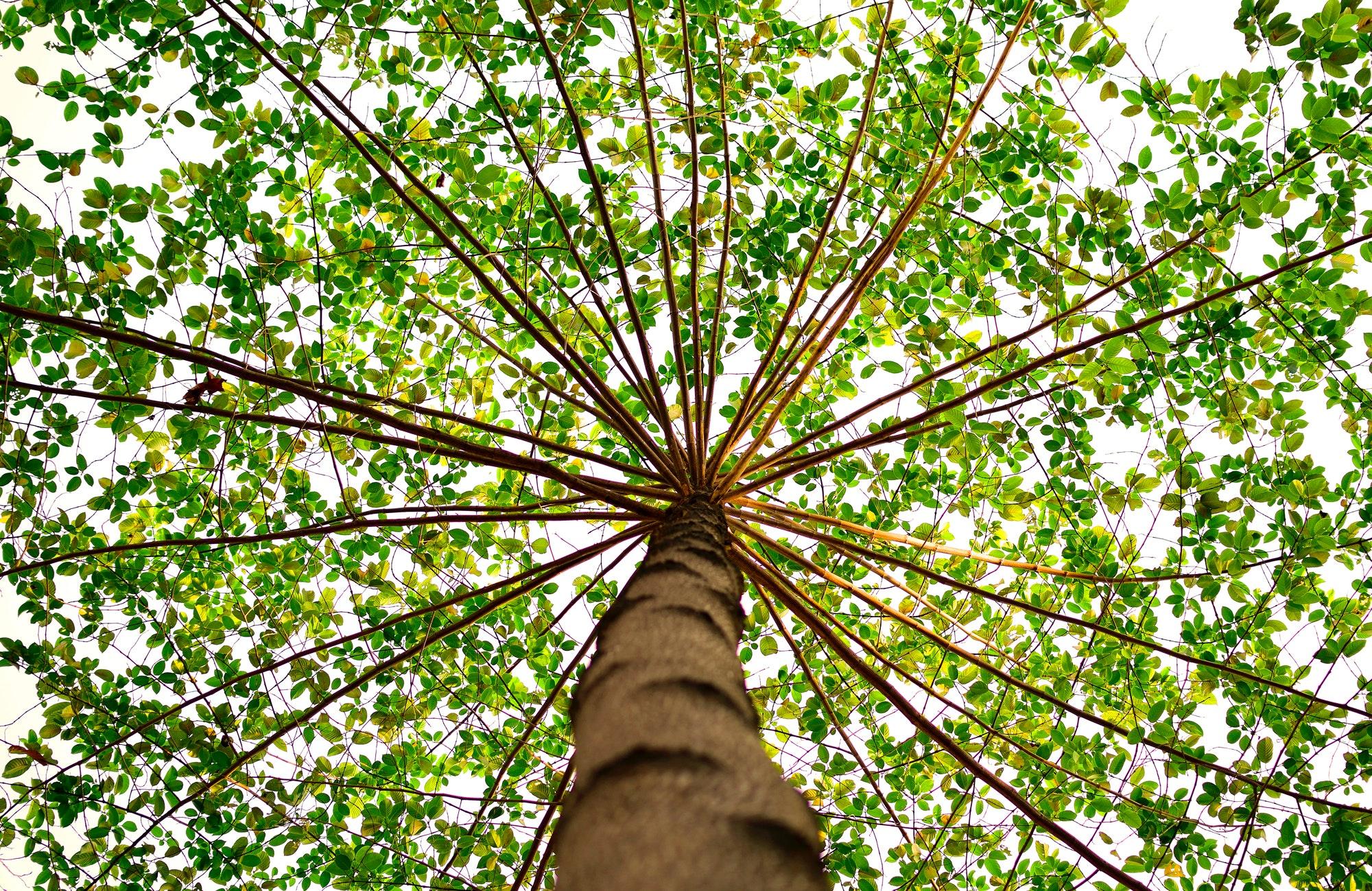 Rüyada Ağacın Çiçek Açtığını Görmek