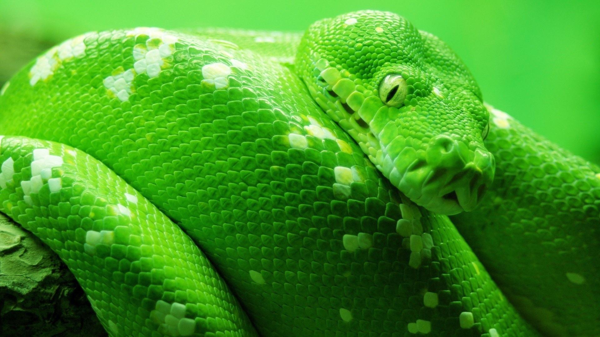 Rüyada Yeşil Yılan Beslediğini Görmek