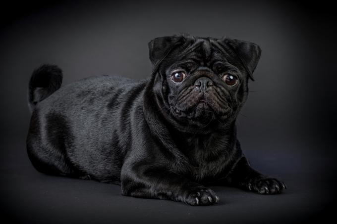 Rüyada Siyah Köpek Sevmek ve Gezdirmek
