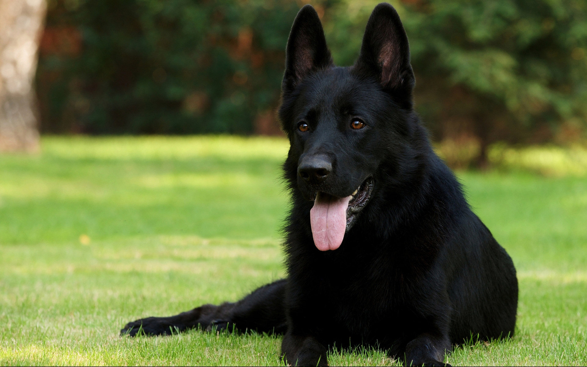 Rüyada Oynayan Siyah Köpek Sevmek