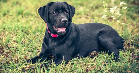 Rüyada Siyah Köpek Sevmek ve Oynamak
