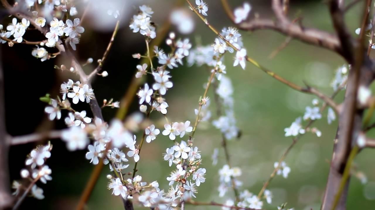 Rüyada Bahçede Ağaçların Çiçek Açtığını Görmek