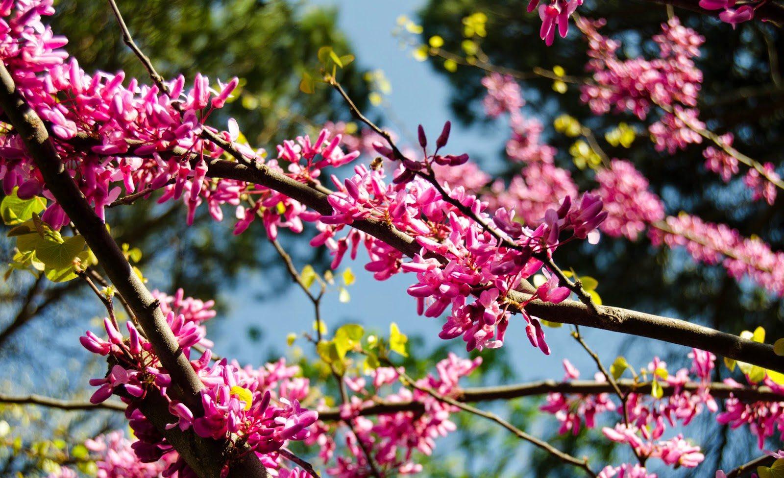 Rüyada Ağaçların Çiçek Açtığını Görmek