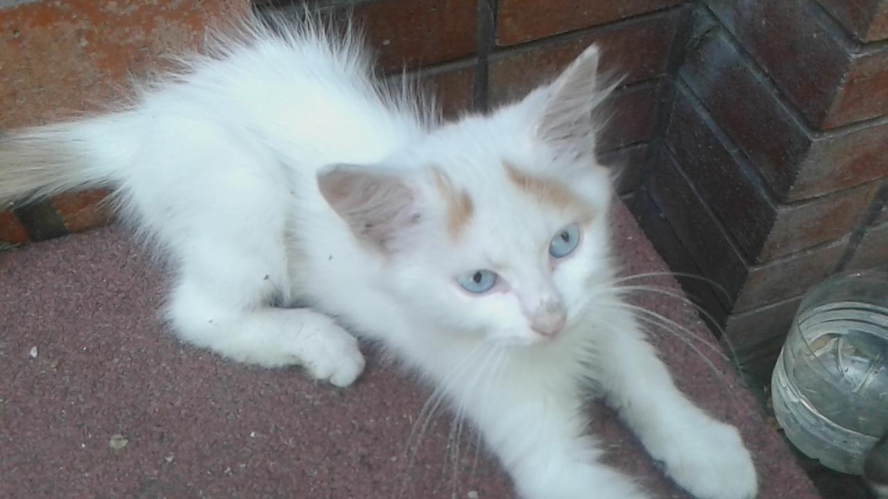Rüyada Beyaz Kedi Yavrusu Beslediğini Görmek