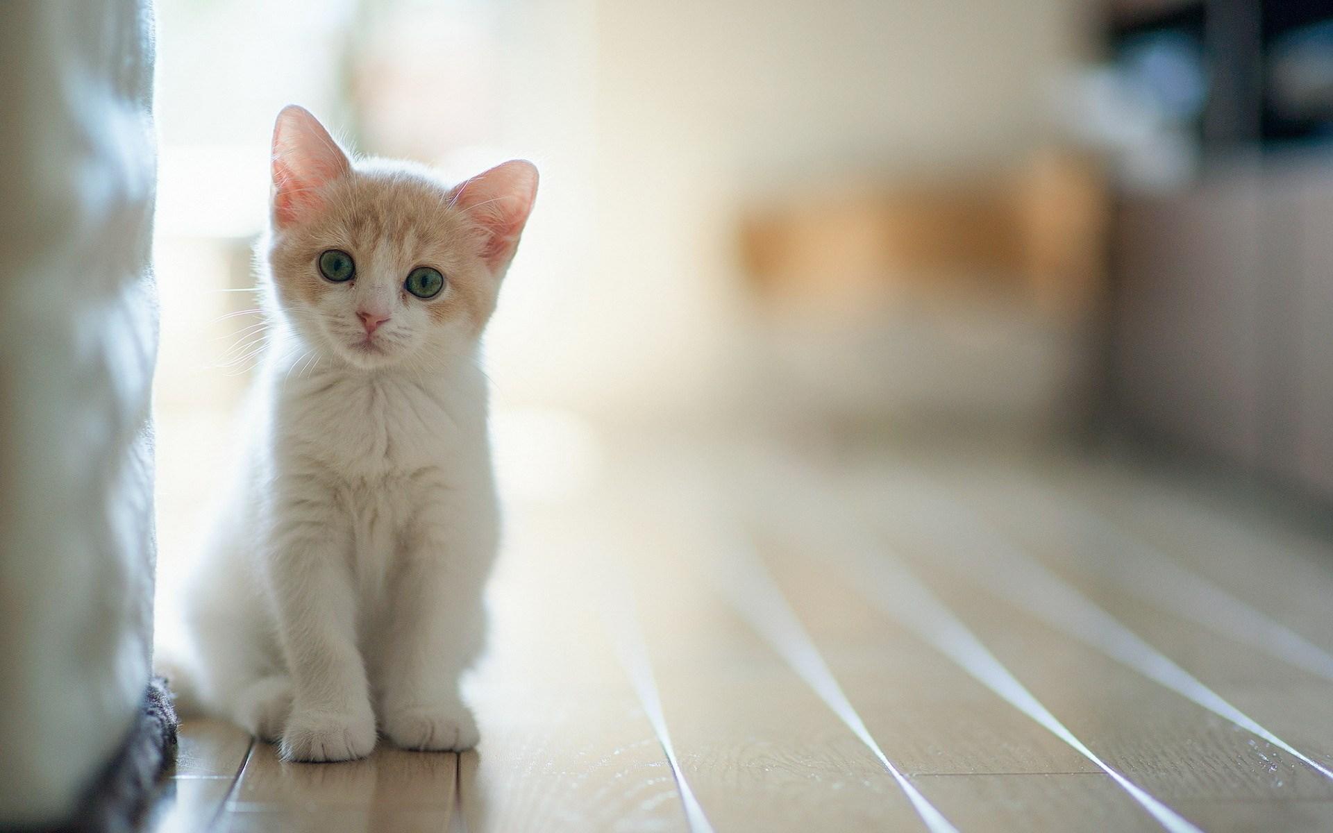 Rüyada Beyaz Kedi Yavrusu Görmek