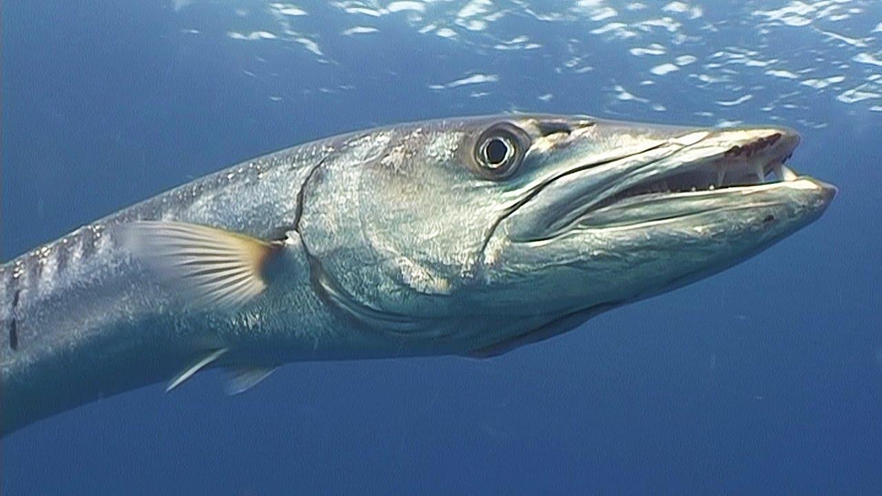 Rüyada Çok Büyük Balık Görmek