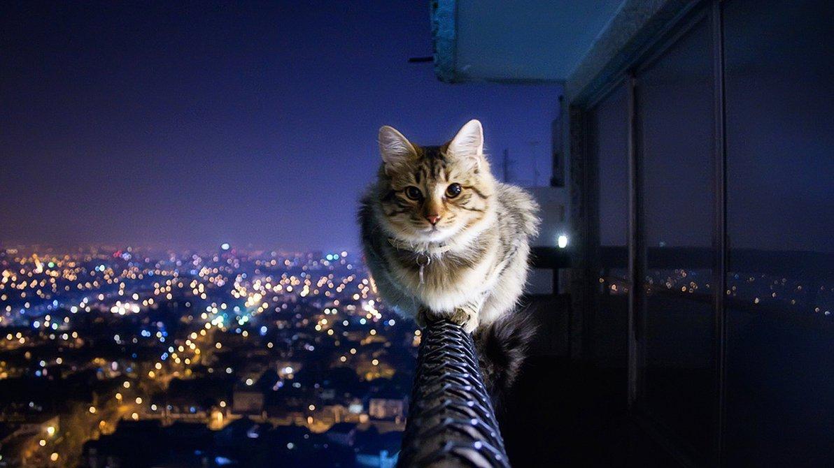 Rüyada Sokakta Birden Fazla Kedi Görmek