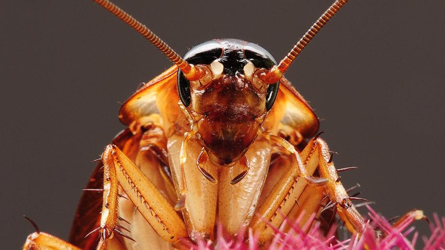 Rüyada Uçan Hamam Böceği Görmek
