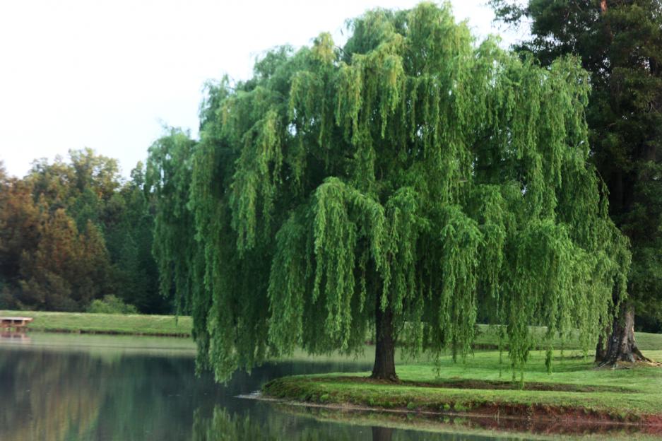 Rüyada Uzun Ağaç Görmek