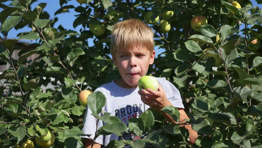 Rüyada Ağaçtan Meyve Yemek