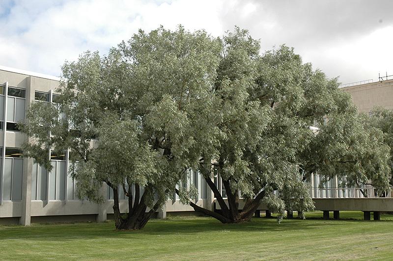 Rüyada Çürük Uzun Bir Ağaç Yıkıldığını Görmek