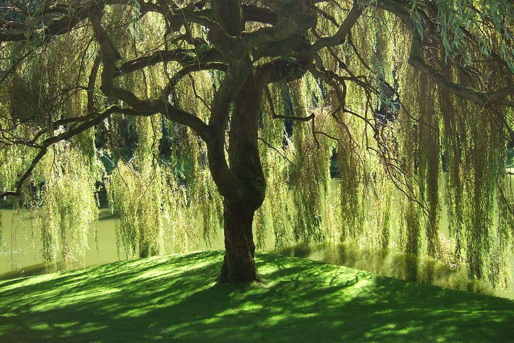 Rüyada Uzun Ağaçlar Görmek ve Kesmek