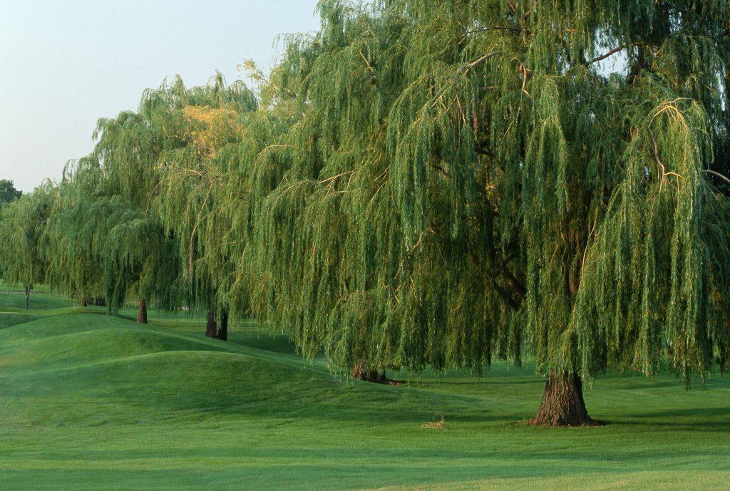 Rüyada Uzun Ağaç Görmek ve Dokunmak