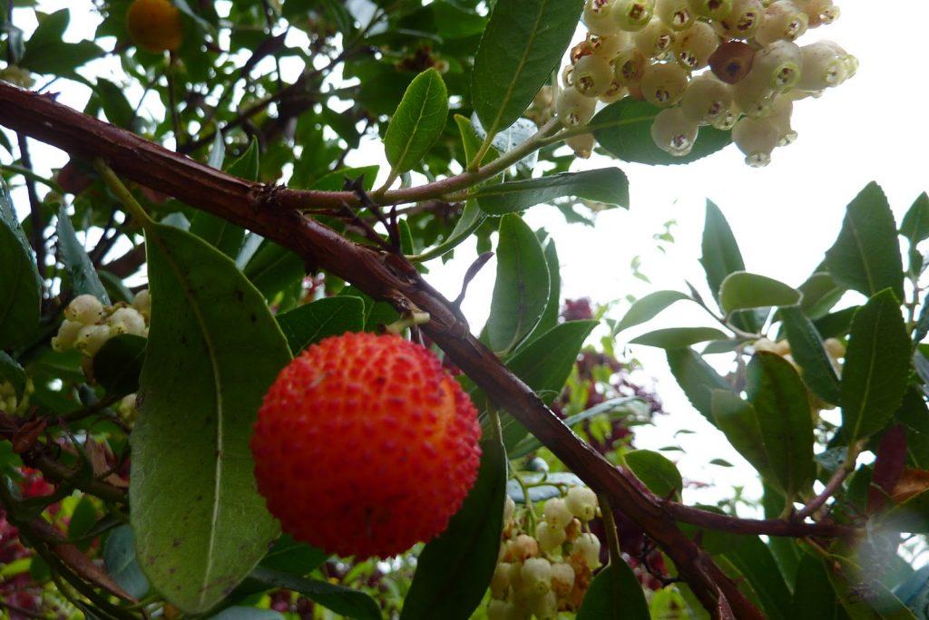 Rüyada Yeşil Ağaçtan Olmamış Meyve Toplayıp Yemek