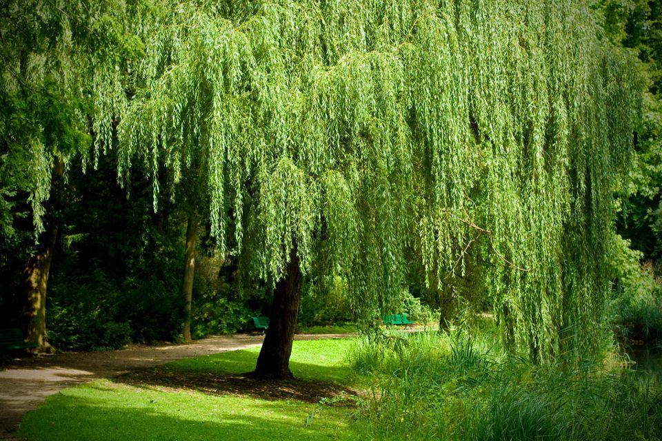 Rüyada Büyük Uzun Ağaçlar Görmek