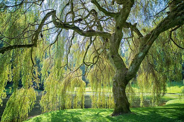 Rüyada Kurumuş Uzun Ağaç Görmek
