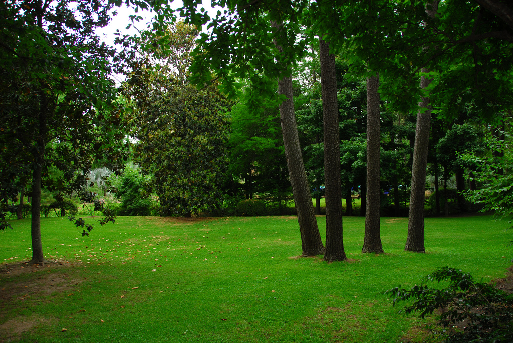 Rüyada Uzun Ağaçlar Görmek