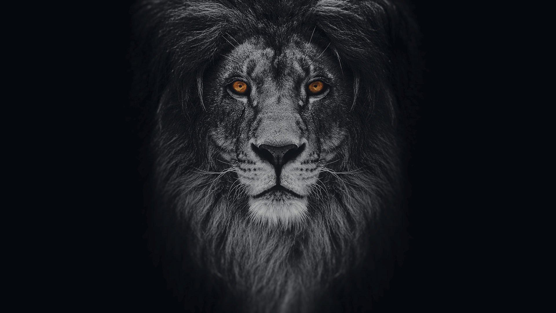 Rüyada Siyah Aslan Görmek