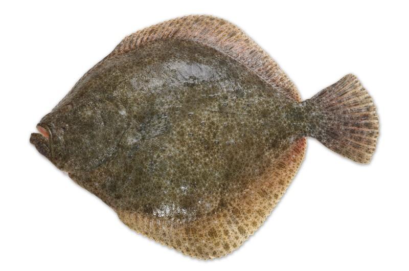 Rüyada Kalkan Balığı Görmek