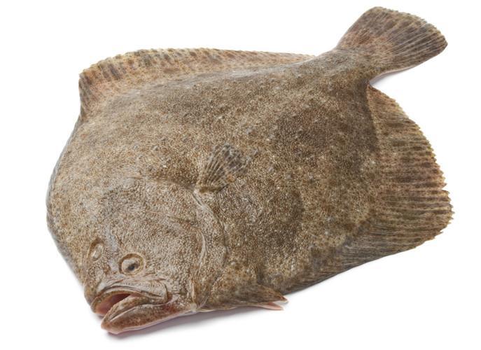 Rüyada Kalkan Balığı Görmek ve Kesmek