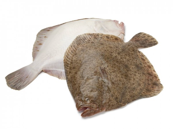Rüyada Büyük Kalkan Balığı Görmek