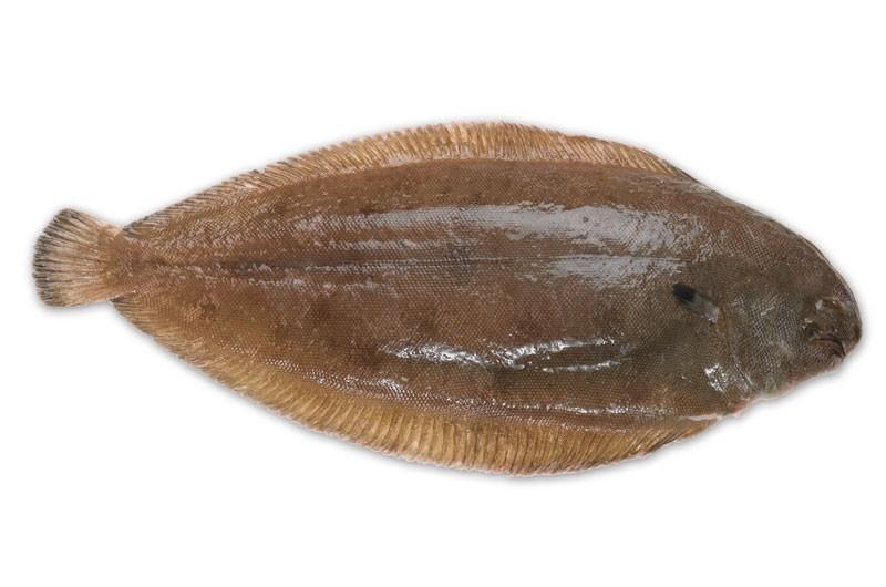 Rüyada Taze Kalkan Temiz Balığı Ayıklanmış Görmek